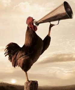 wake-up-rooster-w